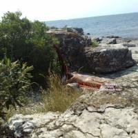Beach Voyeur:Voyeur Pics