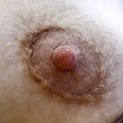 Medium tits of my wife - Chris