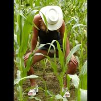 Soo Hot N A Corn Field